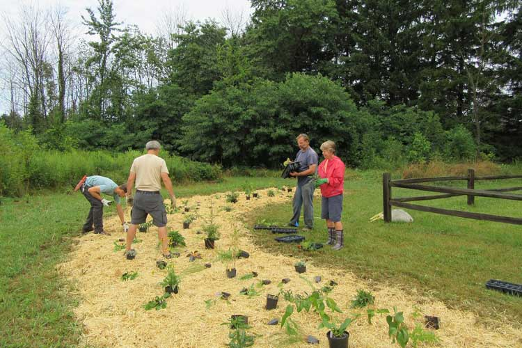 Volunteers work on plantings to create a habitat that attracts Monarch butterflies